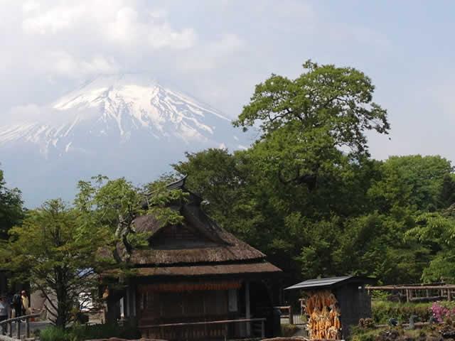 写真:忍野八海からの富士山