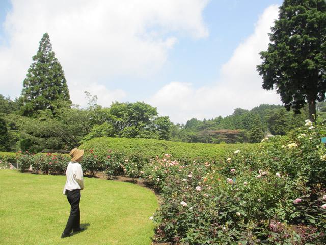 写真3:六甲山カンツリーハウスローズウォーク(バラ園)