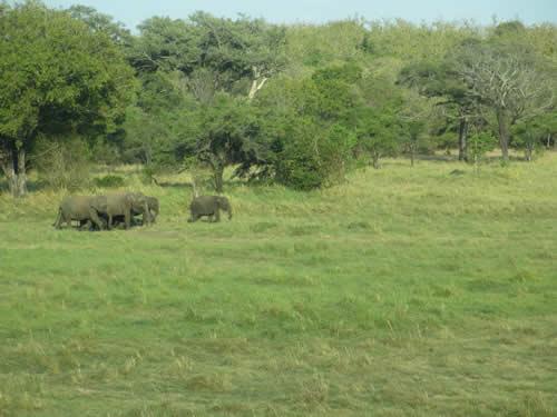 写真:野生の象