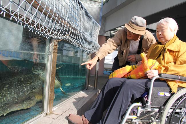 写真:ウミガメの水槽とお二人