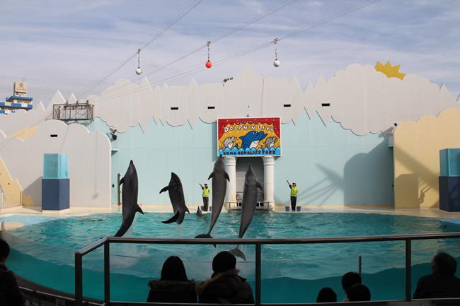 写真:須磨水族館のイルカショー