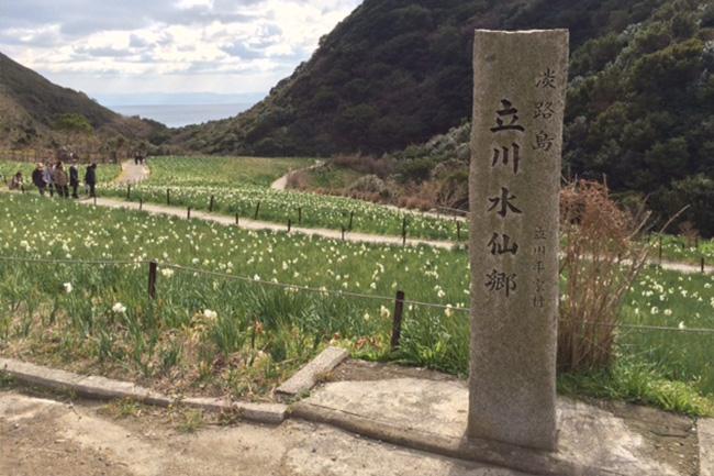 写真:立川水仙郷