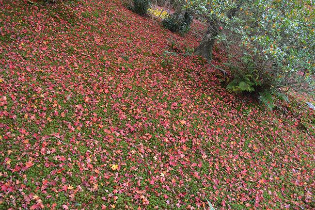 写真:嵐山。紅葉に染まる道