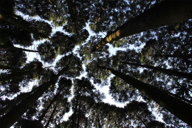 写真:見上げると木々の緑に包まれる