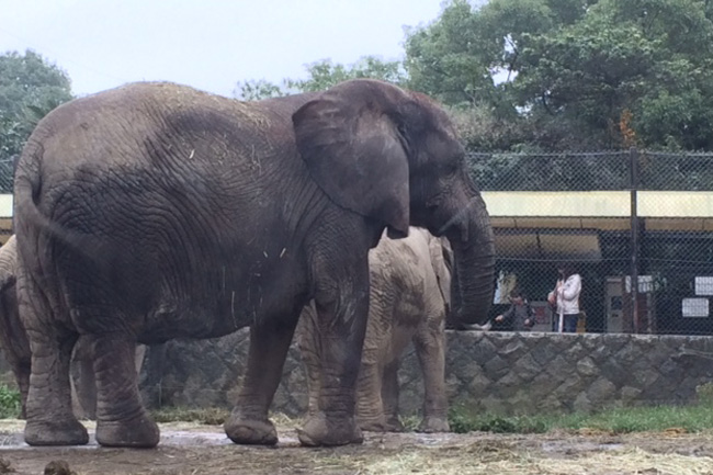 写真:車窓から見える動物。ゾウ