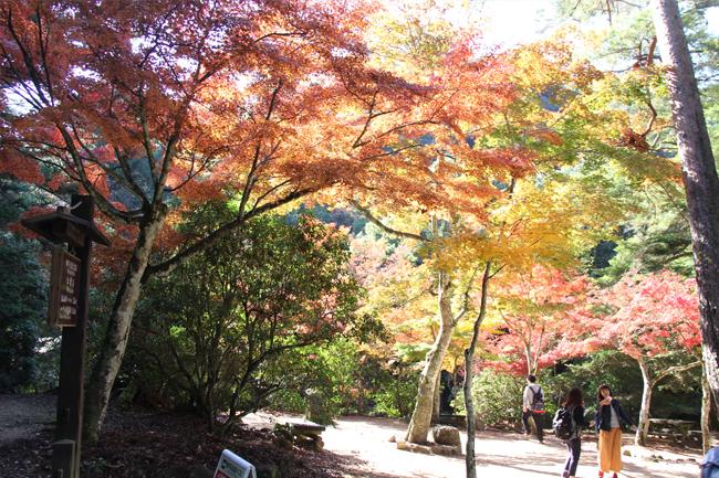 写真:紅葉も楽しみました