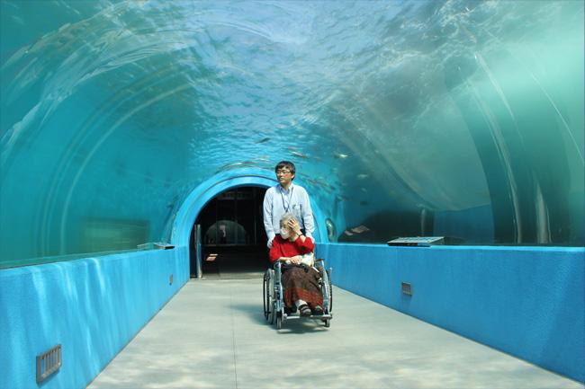 写真:水族館水中トンネルを楽しむT様
