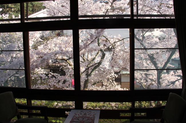 写真:窓からみた桜
