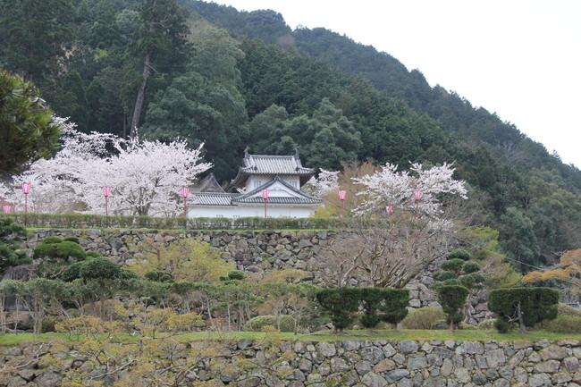 写真:お城と桜