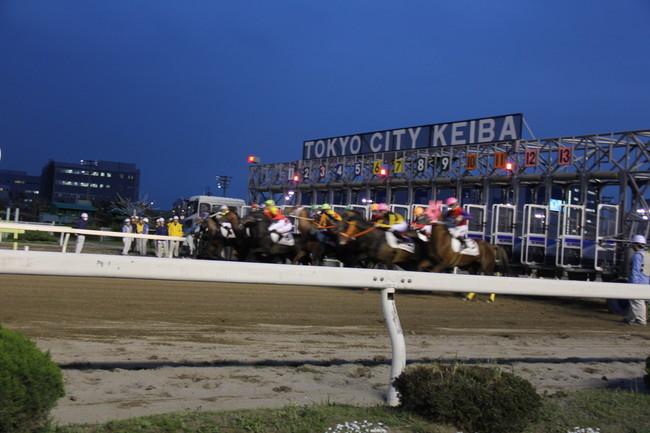 写真:疾走する競走馬