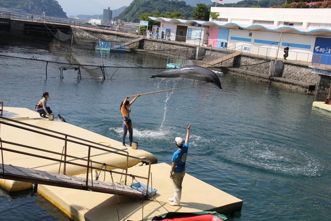 写真:ジャンプするイルカ