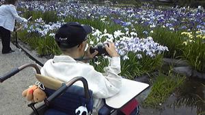 写真:しょうぶを撮影するお客様