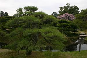 写真:栗林公園の松