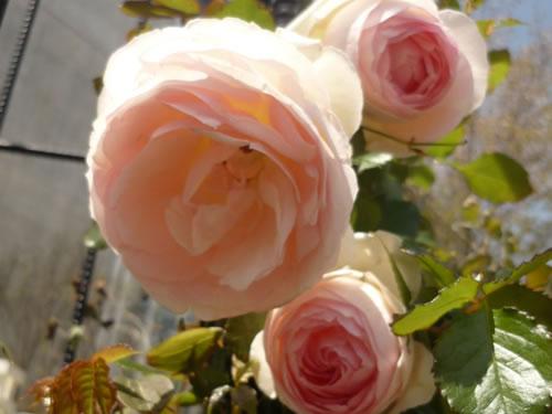 写真:淡路島の花の写真。