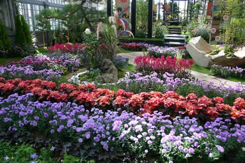 写真:奇跡の星の植物館のひと風景