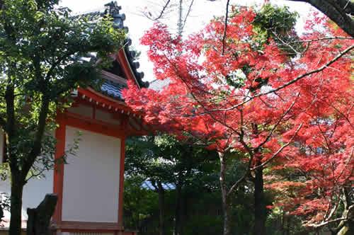 写真:お寺の木々も紅葉がきれいです