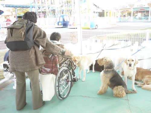 写真:車椅子も入ることができ、犬と直に遊べる