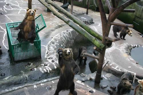 写真:クマ牧場のパフォーマンス