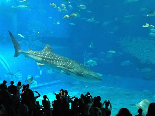 写真:美ら海水族館