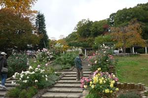 写真:花と紅葉を眺める老婦人